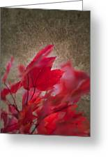 Red Maple Dreams Greeting Card
