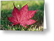 Red Maple Leaf And Dew Greeting Card