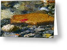 Red Maple Leaf In Stream Greeting Card