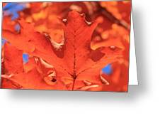 Peak Color Maple Leaves Greeting Card