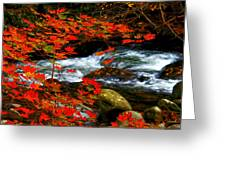 Red Maple Stream  Greeting Card