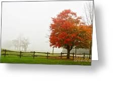 Red Maple Tree And A Split-rail Fence Greeting Card