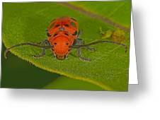 Red Milkweed Beetle Greeting Card