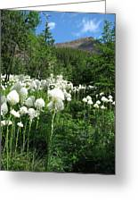 Red Mountain Beargrass Greeting Card