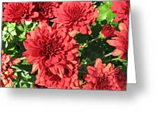 Red Mums Greeting Card