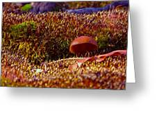 Red Mushroom Inn Greeting Card
