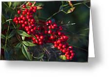 Red Nandina Berries - The Heavenly Bamboo Greeting Card