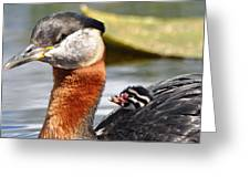 Red-necked Grebe And Chick Greeting Card