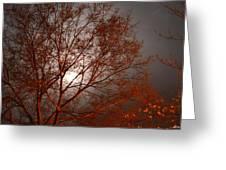 Red Oak At Sunrise Greeting Card