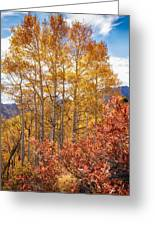 Red Oak Brush And Golden Aspens Greeting Card