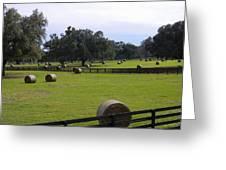 Red Oak Landscape Greeting Card