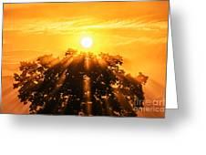 Red Oak Sunrise Fog Greeting Card