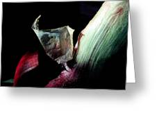 Red Onion In The Dark Greeting Card