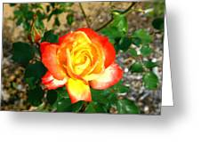 Red Orange And Yellow Rose Greeting Card