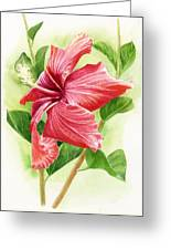 Red Orange Hibiscus Greeting Card