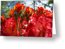 Red Orange Roses Art Prints Floral Photography Greeting Card