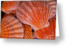 Red Orange Sea Shells Greeting Card