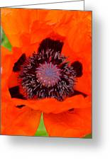 Red Oriental Poppy Greeting Card