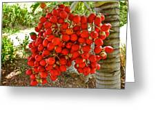 Red Palm Tree Fruit Greeting Card by Kirsten Giving