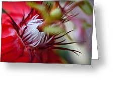 Red Passion Flower Stamens Greeting Card