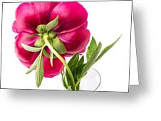 Red Peony Flower Back Greeting Card