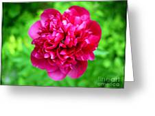 Red Peony Flower Greeting Card by Edward Fielding