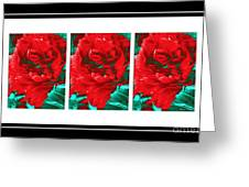 Red Peony Triptych Greeting Card