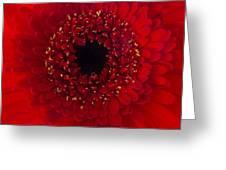 Red Petal Macro 3 Greeting Card