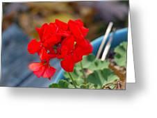 Red Petals Greeting Card