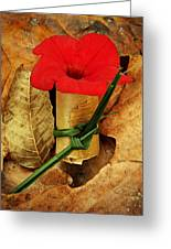 Red Petunia  Greeting Card