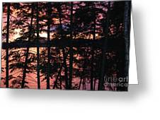 Red Pines Greeting Card