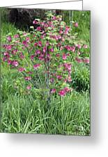 Red Pink Flowering Currant Photograph By Lee Serenethos