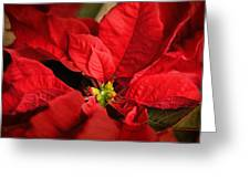 Red Poinsettia 2 Greeting Card