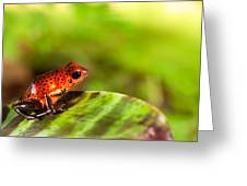 Red Poison Dart Frog Greeting Card