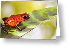 Red Poison Frog Greeting Card