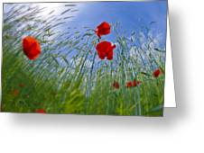 Red Poppies And Blue Sky Greeting Card