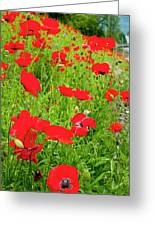 Red Poppies Flowers In Field Greeting Card