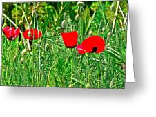 Red Poppies Near Meryem Ana Evi-cottage Believed To Be Mary's Last Home-turkey Greeting Card