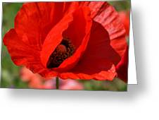Red Poppy 2 Greeting Card