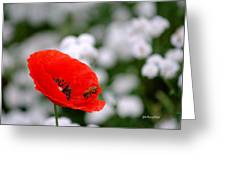 Red Poppy And The Bee Greeting Card