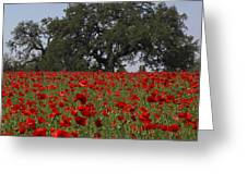 Red Poppy Field Greeting Card