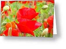 Red Poppy Flowers Art Prints Floral Greeting Card