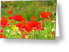 Red Poppy Flowers Meadow Art Prints Greeting Card