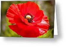 Red Poppy Power Greeting Card