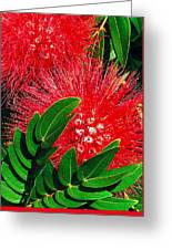 Red Powder Puff Greeting Card