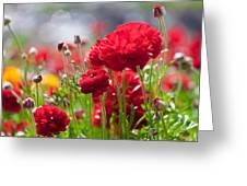Red Ranunculus Greeting Card