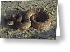 Red Rattlesnake Baja California Mexico Greeting Card