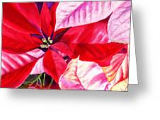 Red Red Christmas Greeting Card