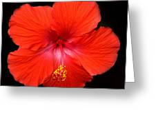 Red Red Greeting Card