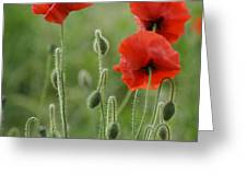 Red Red Poppies 1 Greeting Card